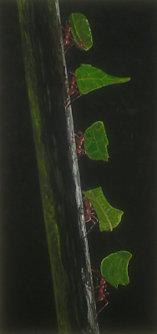im Regenwald... - 0,30 x 0,60 m - Acryl auf Leinwand